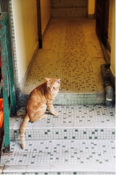 Picture of a cat on ceramic tile flooring