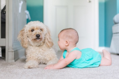 A puppy and a baby sit on a carpeted floor